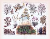 Chromolithographie aus 1893 zeigt verschiedene Steppenpflanzen.