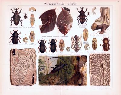 Chromolithographie aus 1893 zeigt verschiedene Insekten die als Waldschädlinge gelten.