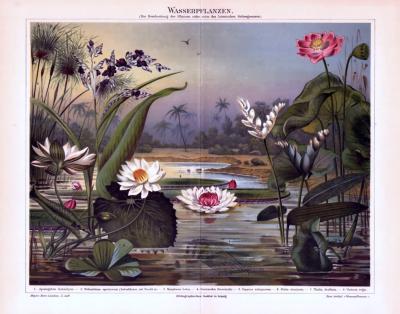 Chromolithographie aus 1893 zeigt verschiedene Wasserpflanzen in einer Szenereie an einem See.