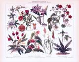 Chromolithographie aus 1893 zeigt verschiedene Zimmerpflanzen.