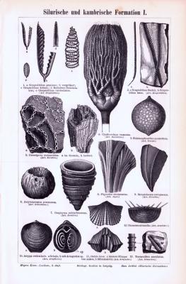 Stich aus 1893 zeigt verschiedene Fossilien aus der silurischen und kambrischen Formation.