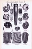 Silurische und kambrische Formation I. + II. ca. 1893 Original der Zeit