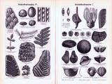Stiche aus 1893 zeigen Landschaft und Fossilien aus der erdzeitlichen Formation der Steinkohlzezeit.