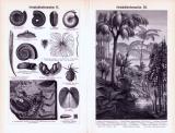 Steinkohleformation I. - IV. ca. 1893 Original der Zeit