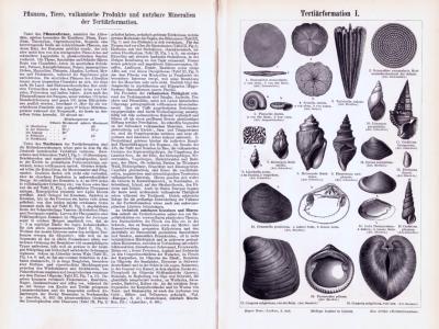 Abhandlung und Stiche aus 1893 zur erdgeschichtlichen Zeit des Tertiär.