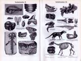 Tertiärformationen I. - III. ca. 1893 Original der Zeit