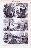 Stiche aus 1893 zeigen Nester verschiedener Tiere.
