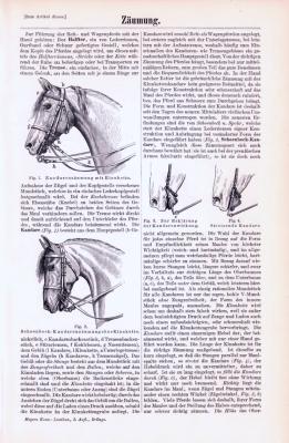 Technische Abhandlung mit Stichen aus 1893 zum Thema Zäumung.