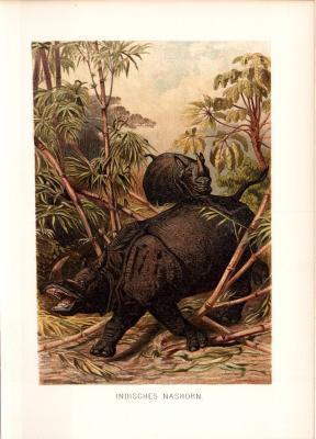 Chromolithographie aus dem Jahr 1890 zeigt zwei Indische Nashörner in freier Wildbahn.