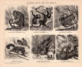 Der Holzstich aus dem Jahr 1891 zeigt 6 verschiedene...
