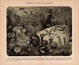 Lichtdruck von 1891 zeigt ein Meerwasseraquarium und...