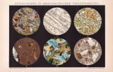 Mikroskopie Schnitte Chromolithographie 1891 Original der...