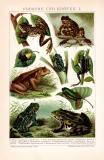 Frösche und Kröten I. Chromolithographie 1892...