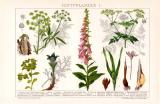 Giftpflanzen I. Chromolithographie 1892 Original der Zeit