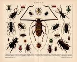 Käfer II. Chromolithographie 1891 Original der Zeit