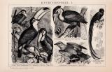 Kuckucksvögel I. Holzstich 1891 Original der Zeit