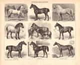 Pferderassen Holzstich 1891 Original der Zeit