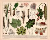 Pflanzenkrankheiten Chromolithographie 1891 Original der...