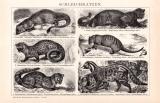 Schleichkatzen Holzstich 1891 Original der Zeit