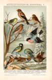 Mitteleuropäische Singvögel I....