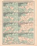 Paläogeographie Deutschland Lithographie 1891...
