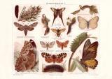 Schmetterlinge I. Chromolithographie 1889 Original der Zeit