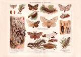 Waldverderber Spinner Chromolithographie 1890 Original...