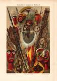 Australisch ozeanische Kultur I. historischer Druck...