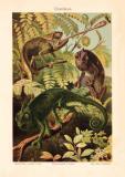 Chamäleon Chromolithographie 1903 Original der Zeit