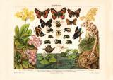 Darwinismus historischer Druck Chromolithographie ca. 1903