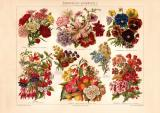 Entstehung der Gartenpflanzen I. historischer Druck...