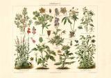Giftpflanzen II. historischer Druck Chromolithographie...