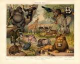 Äthiopische Fauna historischer Druck...