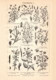 Futterpflanzen I. - II. historischer Druck Holzstich ca....