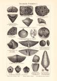 Devonische Formation I. - II. historischer Druck...