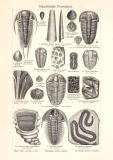 Kambrische Formation historischer Druck Holzstich ca. 1905