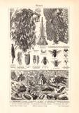 Bienen + Bienenzucht historischer Druck Holzstich ca. 1902