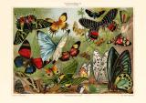 Schmetterlineg II.  Exotische historischer Druck...