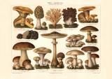 Pilze I. Genierßbare Pilze Chromolithographie 1906...