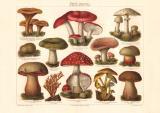 Pilze II. Giftige Pilze Chromolithographie 1906 Original...