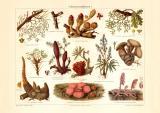 Schmarotzerpflanzen I. historischer Druck...