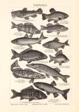 Teichfischerei historischer Druck Holzstich ca. 1908