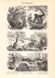 Tierwohnungen I. - II. historischer Druck Holzstich ca. 1908