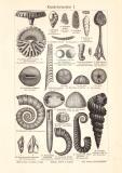 Kreideformation I. - II. Holzstich 1905 Original der Zeit