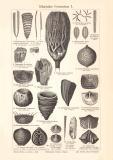 Silurische Formation I. - II. historischer Druck...