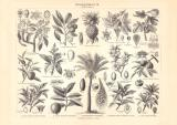 Nahrungspflanzen III. historischer Druck Holzstich ca. 1906