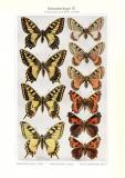 Schmetterlinge IV. Veränderung durch Wärme und...