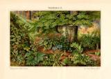 Waldboden II. historischer Druck Chromolithographie ca. 1910