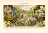 Neue Gartenpflanzen historischer Druck Chromolithographie...