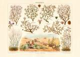 Wüstenpflanzen historischer Druck Chromolithographie...
